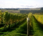 Martinborough Vineyard.